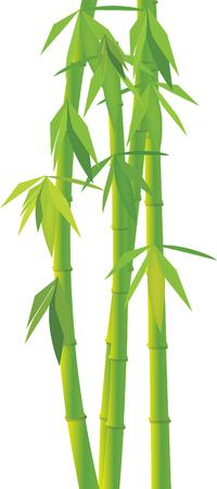 Vector green bamboo Vector