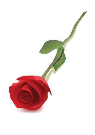 rose stem: A vector red rose
