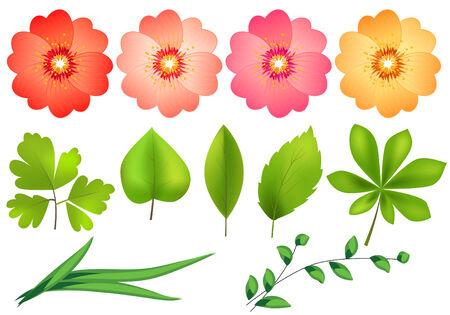 Floral design elements Stock Vector - 7652190