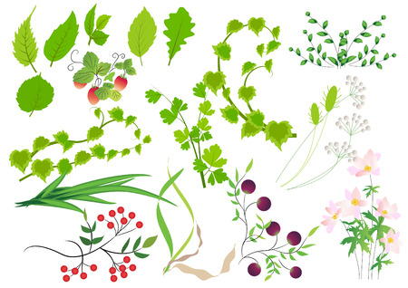 Floral design elements Stock Vector - 7710378