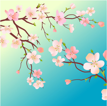 blossoming: Blossoming cherry tree