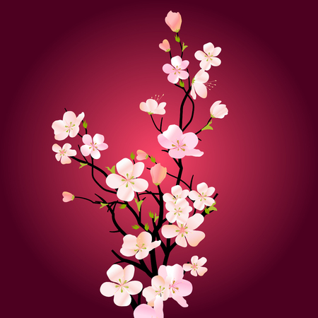 sakura flowers: Blossoming tree background Illustration