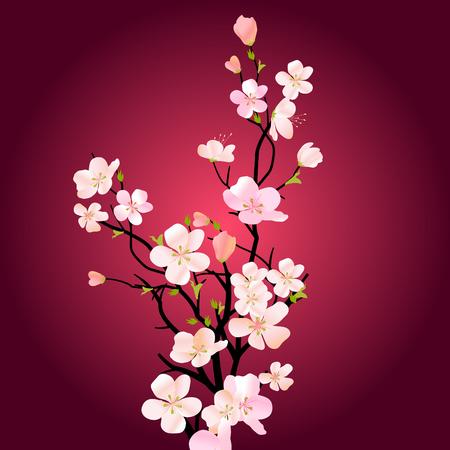 cerisier fleur: �closion arborescence arri�re-plan