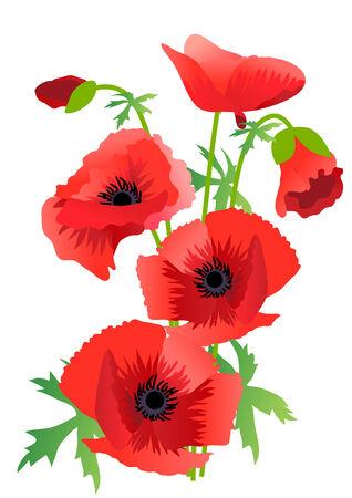 Poppy floral design element Vector