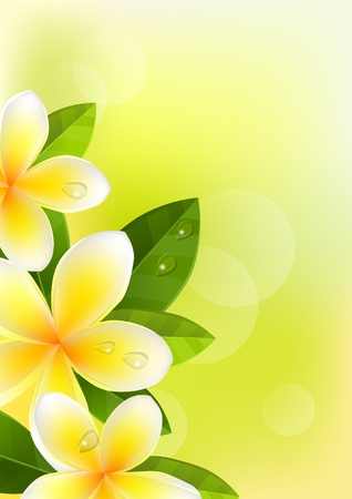 Tropic background with frangipani Stock Vector - 8380158