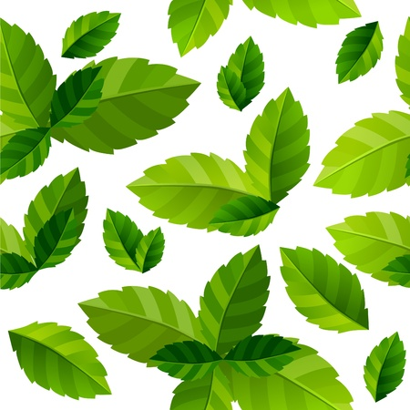 Seamless background mint leaves  Vector