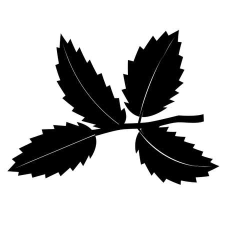 Black-and-white twig with leaves. Vector