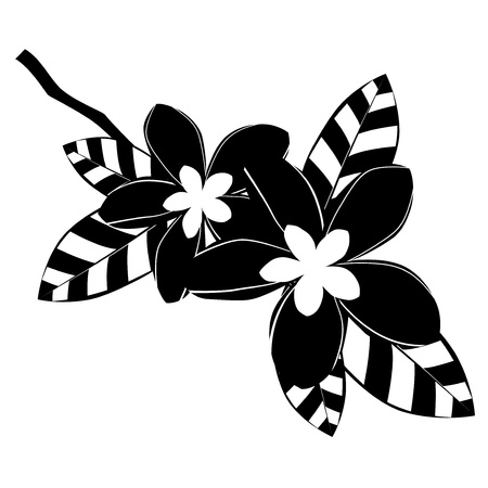 Black and white frangipani flowers Vector