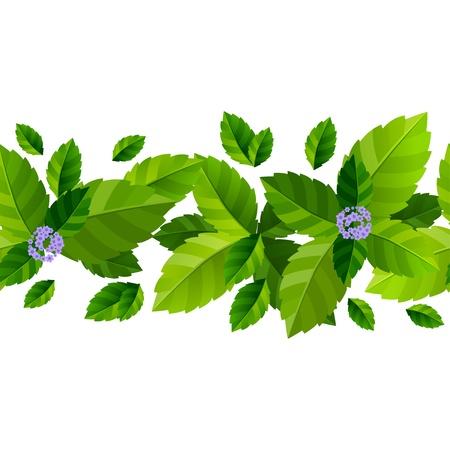 Fondo transparente con hojas de menta fresca de verde