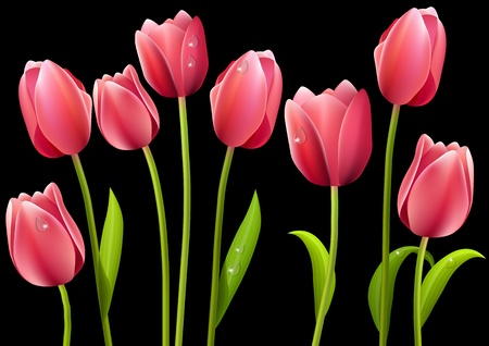 Different tulips isolated on black background  Stock Vector - 8460781