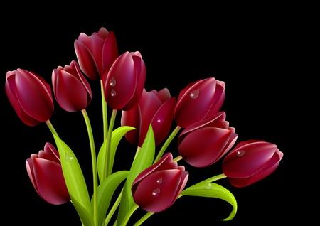 Big bunch of tulips Vector