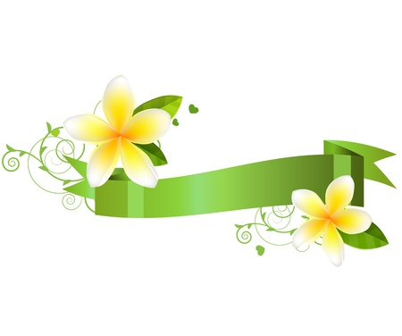 hawaiian flower: Frangiapani flowers
