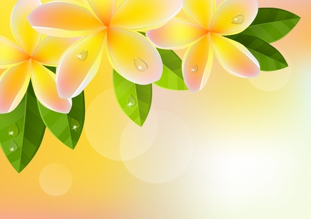 Pink frangipani background photo