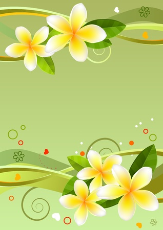 plumeria flower: Frame with frangipanies