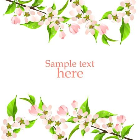 apple leaf: Blossoming apple branch