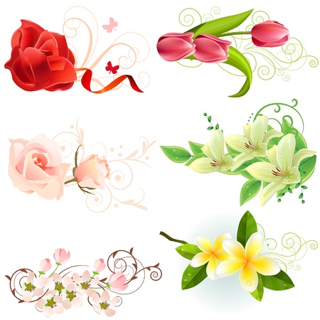 muguet fond blanc: �l�ments de design floral Illustration