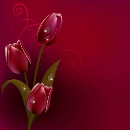 Red dark background with tulips