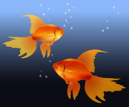 ocean view: Two gold fishes