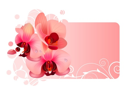pink orchid: Orchid flower Illustration