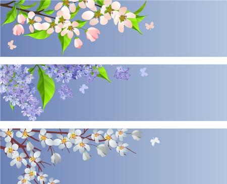꽃이 만발한: Set of blossoming branches 일러스트