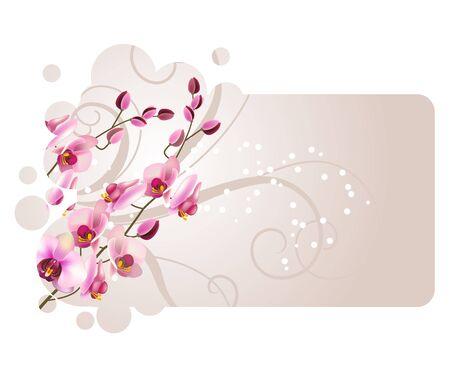 orchidea: Orchid flower Illustration