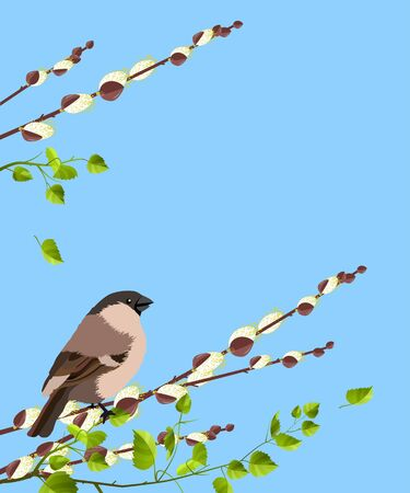 Bird on pussy willow branches Vector