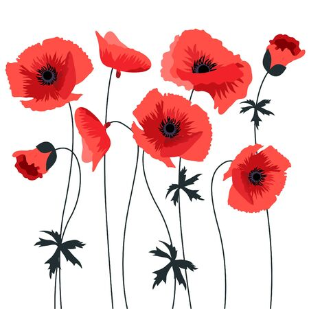 Red poppy Vector