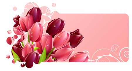 Flores de tulipanes