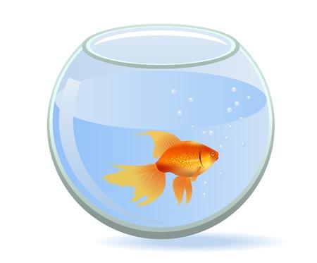 Gold fish in aquarium Stock Vector - 9459134