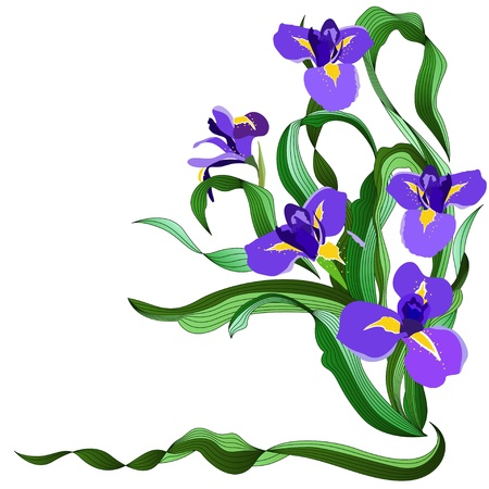 iris flower: Blue irises Illustration