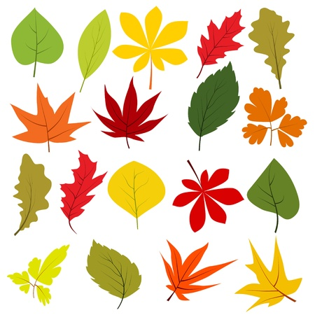 clip art draw: Collection of different autumn leaves  Illustration