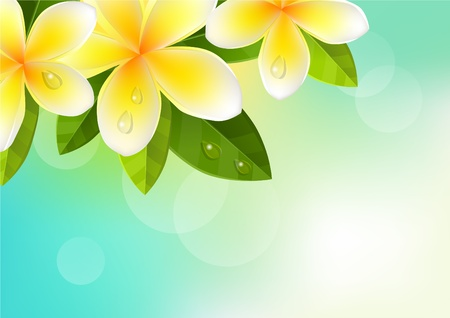 Tropic background with frangipani Vector