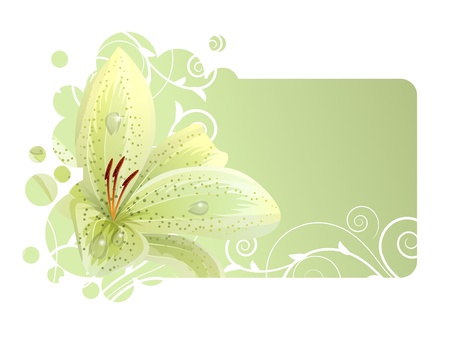 dew: Beautiful frame with white lily