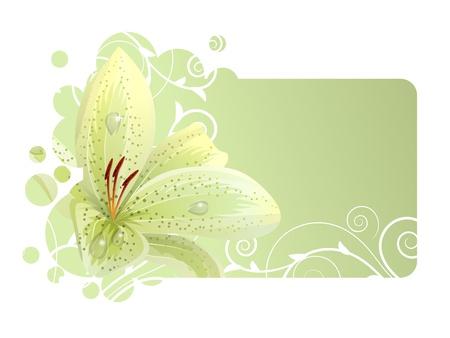 lirio blanco: Bello marco con lirio blanco