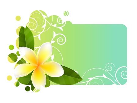 Bannière tropique avec frangipaniers Banque d'images - 10639812