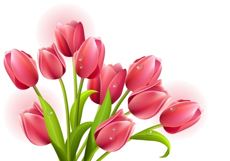 Bunch of tulips isolated Vector
