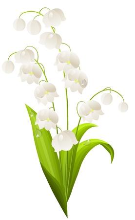 lily flower: Lily van de vallei geïsoleerde Stock Illustratie