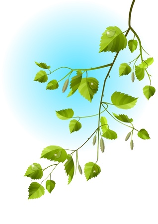 birch leaf: Realistic branch of birch
