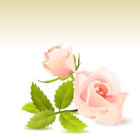passion flower: Beautiful pink rose Illustration