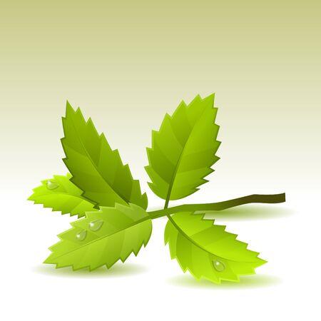 white tea: Green leaves on light background Illustration