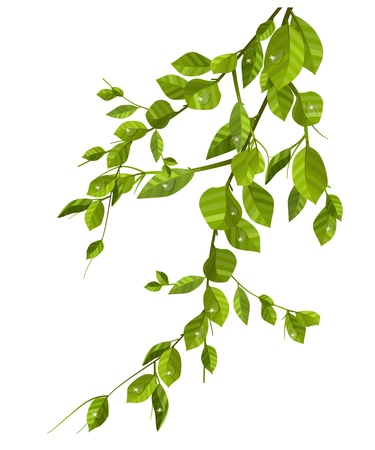 Rama con hojas verdes