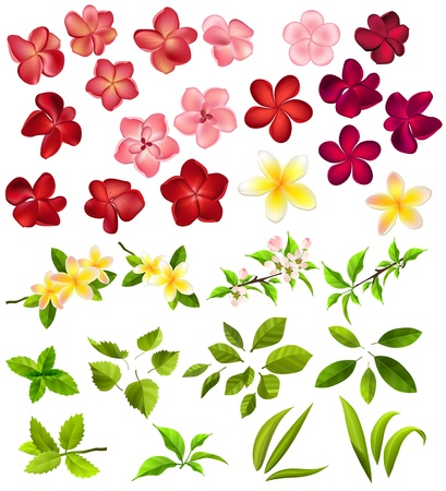 Colecci�n de diferentes flores y hojas