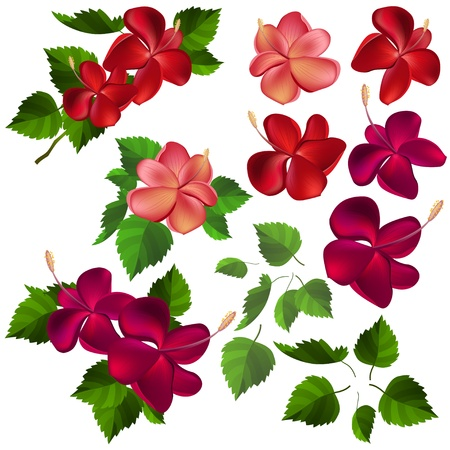 beautiful red hibiscus flower: Colecci�n de diferentes flores y hojas
