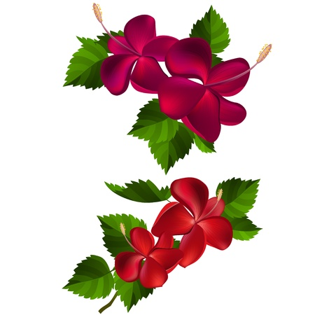 beautiful red hibiscus flower: Colecci�n de flores y hojas Vectores