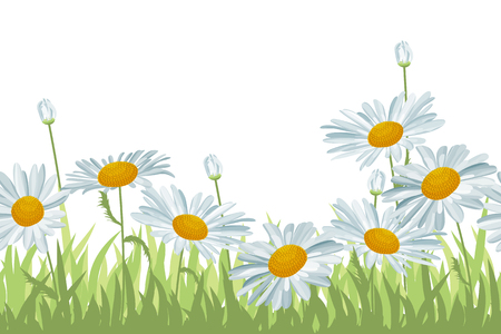 Seamless background with white daisies Vector