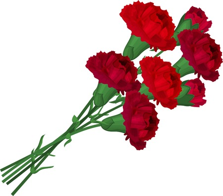 carnations: Bunch with red carnations isolated on white