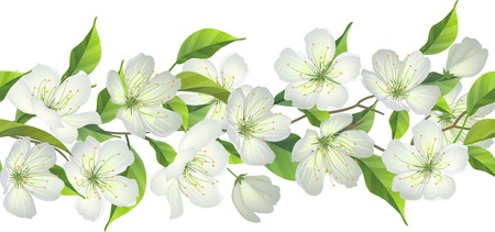 apple border: Seamless horizontal border with blossoming apple tree
