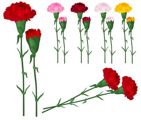 claveles: Claveles rojos aislados en blanco. Colores diferentes. Vectores