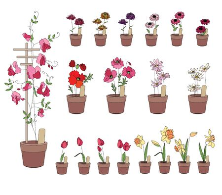 clay pot: Flowers growing on window sills. Gerbera, tulip,daffodil and others isolated on white