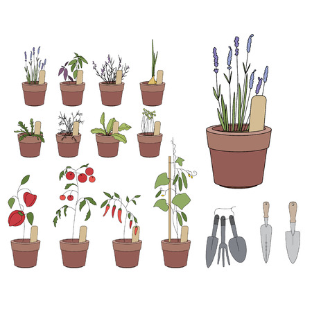 garden patio: Flower pots with herbs and vegetables. Gardening tools. Plants growing on window sills and balcony